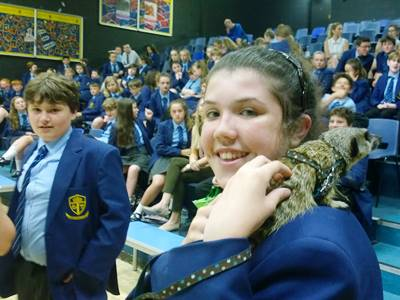 Zoo2U with meerkats at secondary school
