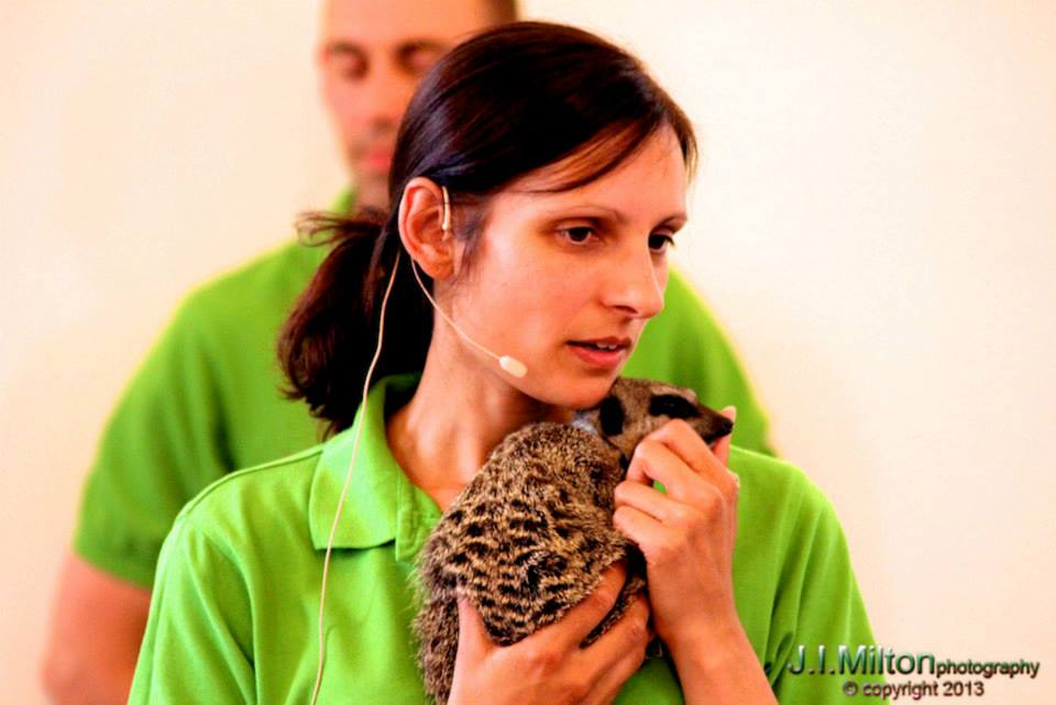 Zoo2U with meerkatas at Primary School