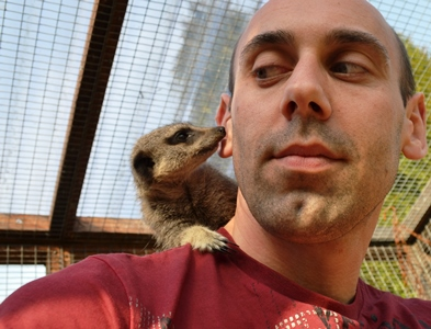 Razi the meerkat loves to walk on peoples shoulders!