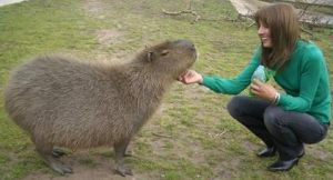 melissa and capybara 2